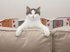 House-sitting the ideal way for pet and animal minding