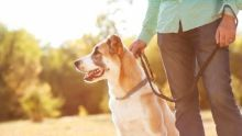 Pet-sitters take dogs out walking