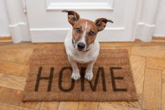 Your dogs are minded at home by house-sitters